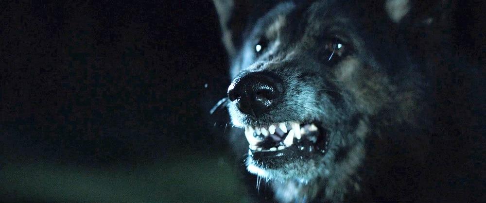 ThePack WolfSnarl1