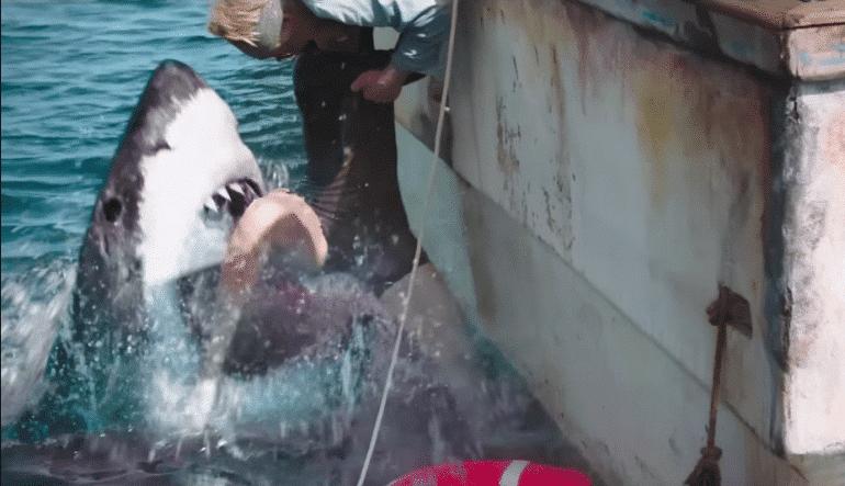 47 meters down requin