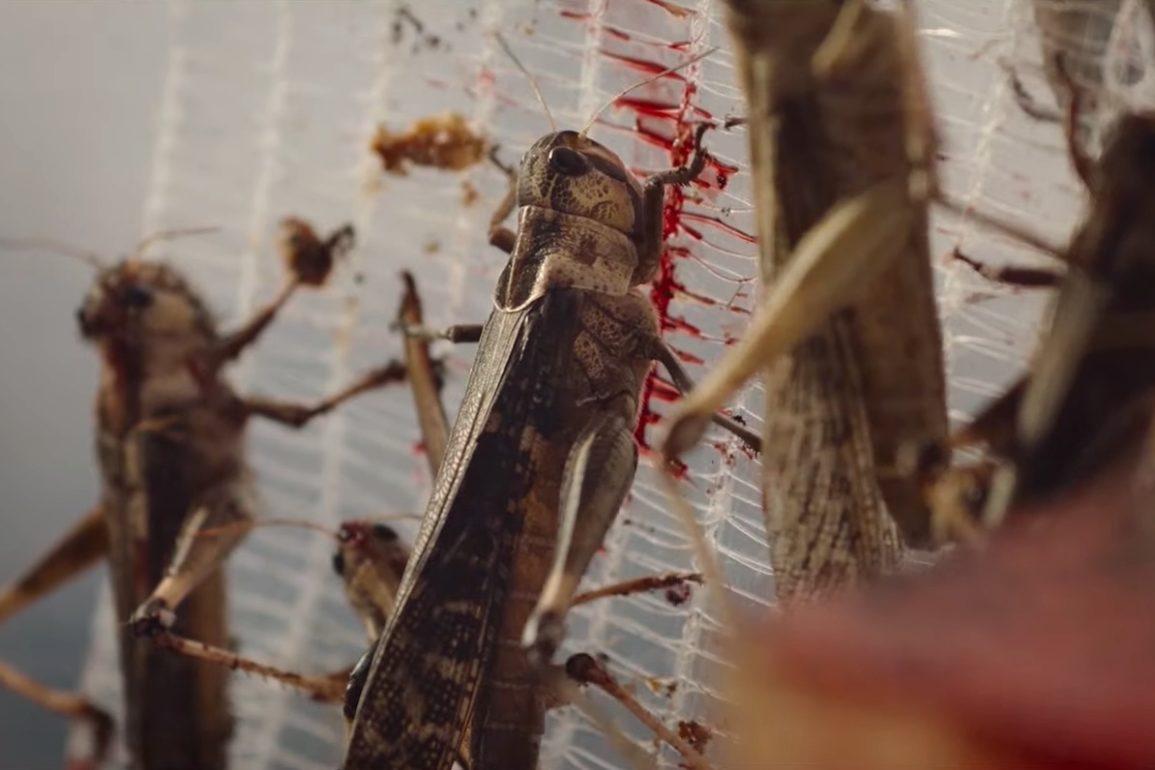 The Swarm Official Trailer Netflix 0 48 screenshot